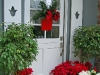 christmas-decor-plants