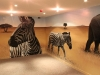 zebras-room