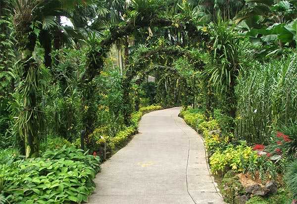 Tropical Arches, Green garden